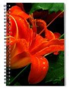 Deep Orange Day Lily Spiral Notebook