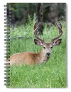 Deer At Rest Spiral Notebook