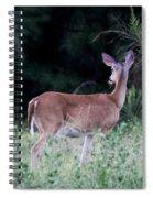 Deer - Doe - I Heard Something Spiral Notebook