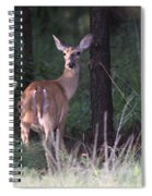 Deer - Doe - Nearing The Edge Spiral Notebook