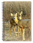 Deer Duo Spiral Notebook