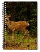 Deer Gazing  Spiral Notebook