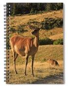 Deer On Mountain 2 Spiral Notebook