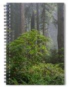 Del Norte Redwoods Spiral Notebook