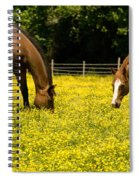 Delaware Dandilions Spiral Notebook