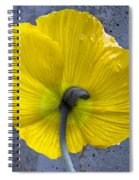 Delicate And Strong Spiral Notebook