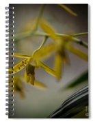 Delicate Edge Spiral Notebook