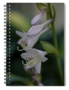 Delicate Lillies Spiral Notebook