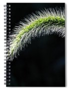 Delicate - Greeting Card Spiral Notebook