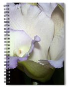 Delicate Purple Orchid Spiral Notebook