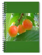 Delicious Plums On The Branch Spiral Notebook