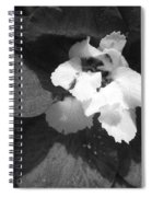 Delphinium From The Magic Fountains Hybrid Named Blue With White Bee Spiral Notebook