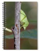Descent Of A Green Stink Bug Spiral Notebook