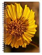 Desert Dandelion Spiral Notebook