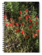 Desert Paint Brush Spiral Notebook