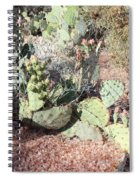 Desert's Collection Of Dried Flowers 3 Spiral Notebook