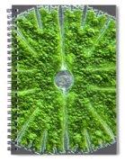Desmid, Dic Spiral Notebook