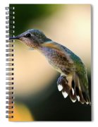 Determined Hummingbird Spiral Notebook