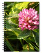 Dew Covered Clover Blossom Spiral Notebook
