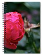 Dew Drenched Rose Spiral Notebook