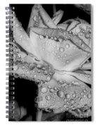 Dew Drop Rose Spiral Notebook