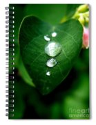 Dew Drops Spiral Notebook