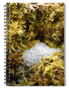 Diamonds In A Dragon Nest Spiral Notebook