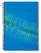 Diatonaceae Spiral Notebook