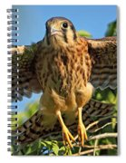 Digitally Enhanced Image, Painterly Spiral Notebook