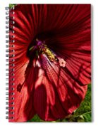 Dinner Plate Hibiscus Spiral Notebook