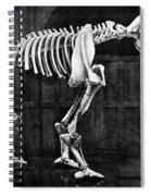 Diprotodon, Cenozoic Mammal Spiral Notebook