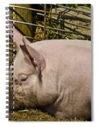Dirty Piggy Spiral Notebook