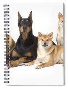 Doberman Pinscher And Friends Spiral Notebook