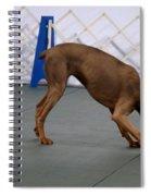 Dobie Retrieving Dumbbell Spiral Notebook