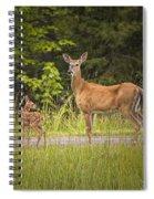 Doe And Fawn Along A Roadside Near Iron Mountain Michigan. Spiral Notebook