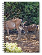 Doe And Twin Fawns Spiral Notebook