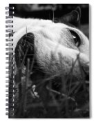 Dog Days Of Summer Spiral Notebook