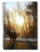 Dog In Morning Sun Spiral Notebook