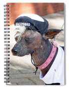 Dog On A Bad Luck Day Spiral Notebook