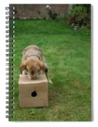 Dog Playing Spiral Notebook
