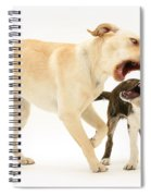 Dogs Playing Spiral Notebook