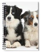 Dogs With Different-colored Eyes Spiral Notebook