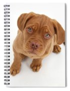 Dogue De Bordeaux Puppy Spiral Notebook