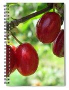 Dogwood Cornus Mas Berries Spiral Notebook
