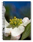 Dogwood Bloom Spiral Notebook