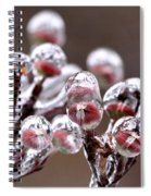 Dogwood Blooms - Sealed In Ice Spiral Notebook