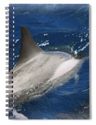 Dolphin Escort Spiral Notebook
