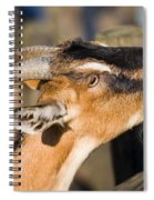 Domestic Goat Spiral Notebook