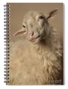 Domestic Sheep Spiral Notebook