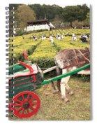 Donkey And Tea Gardens Spiral Notebook